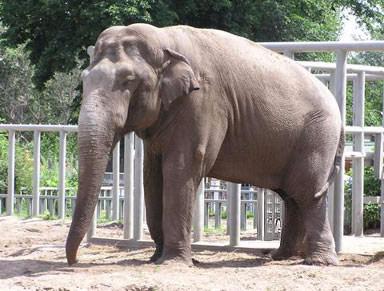 Ein Elefant im Heidelberger Schloss